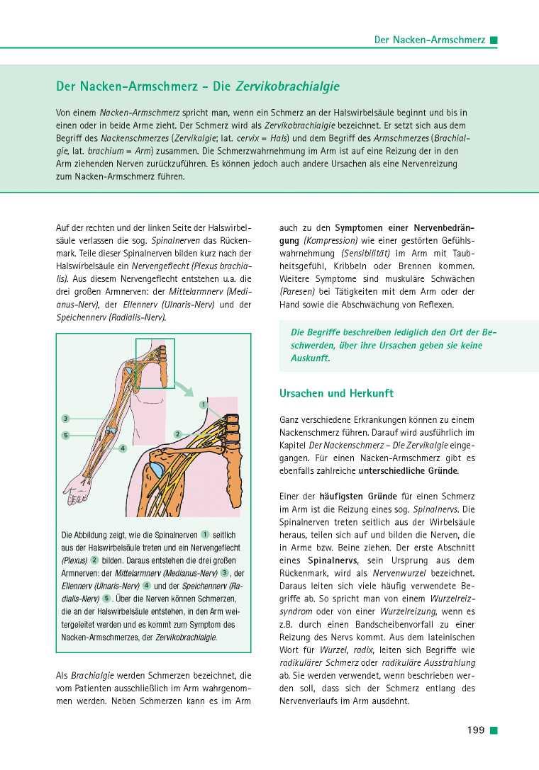 Orthopädie für Patienten | Der Nacken-Armschmerz - Die ...