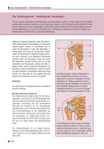 Das Schultergelenk – Anatomische Grundlagen
