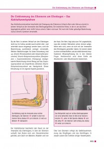 Die Einklemmung des Ellennervs am Ellenbogen – Das Kubitaltunnelsyndrom