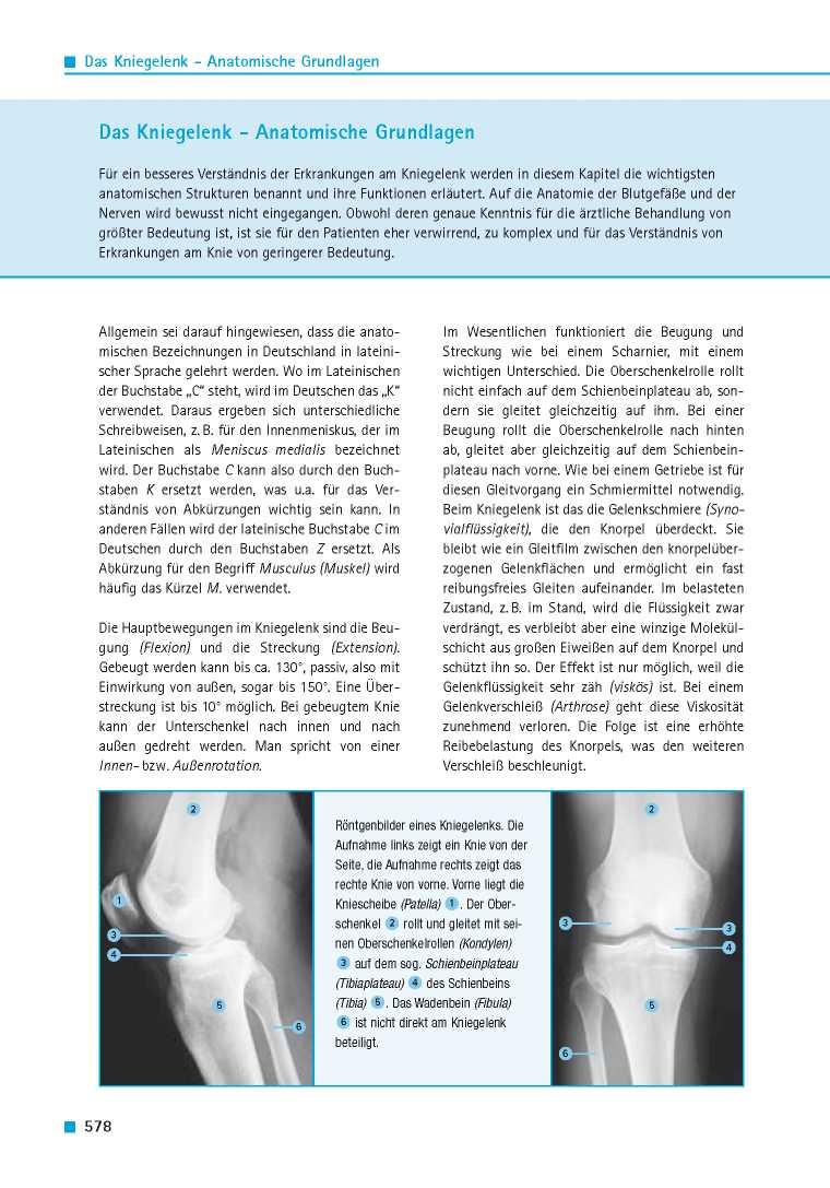 Orthopädie für Patienten | Das Kniegelenk - Anatomische Grundlagen ...